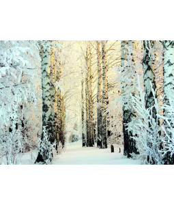 Frozen Birch Woods - Christmas Card Pack