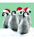 Penguin Family - Large Christmas Card Pack