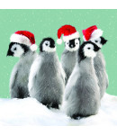 Waddle - Large Christmas Card Pack
