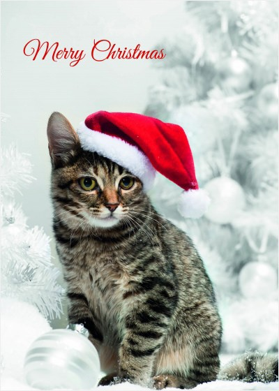 Christmas Cat , Christmas Card Pack
