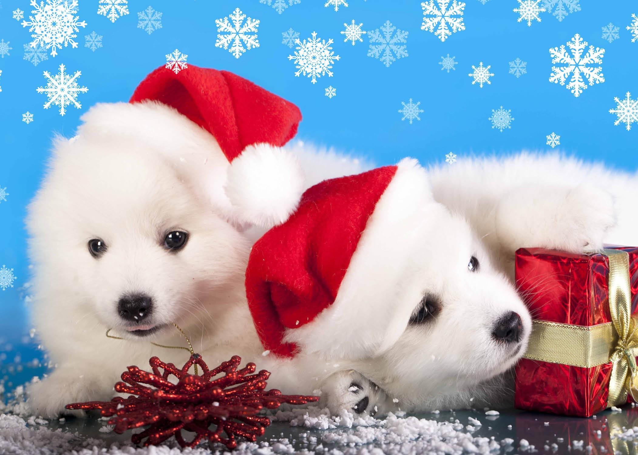 Christmas Puppies.Christmas Puppies Christmas Card Pack