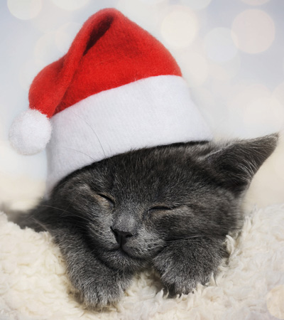 Cute Cat - Animal Christmas Cards Packs