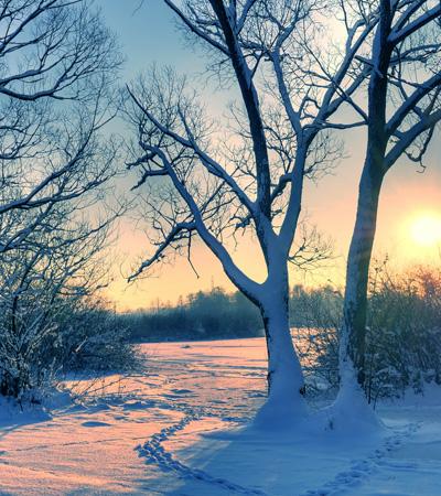 Sunset Trees - Scenic Christmas Card Packs